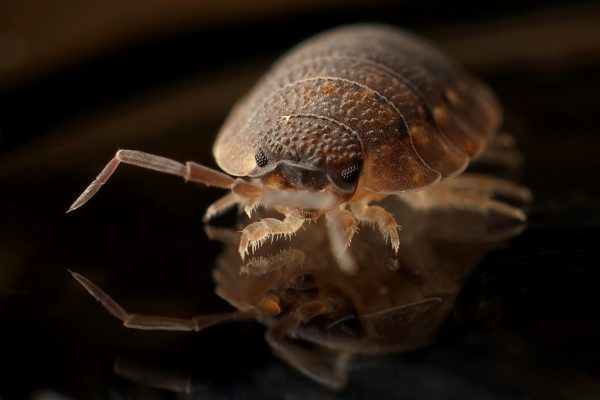 Bed Bug Control In San Diego